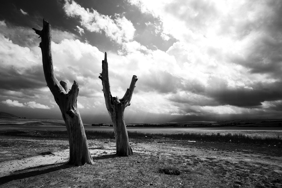 The Passion Of Trees - Ali Shokri's 16 Years Trees Photography Project