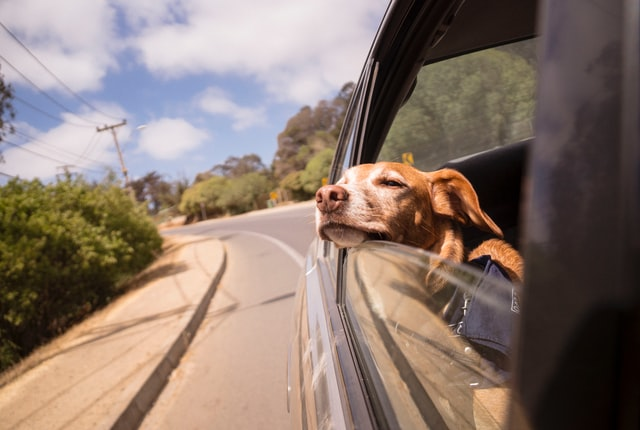The Complete Guide to Safe and Comfortable Travel with Your Dog